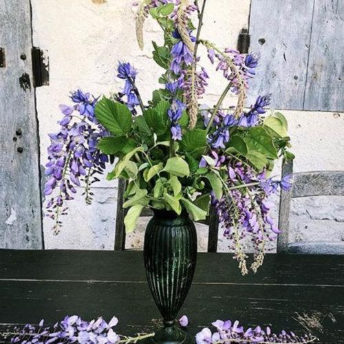 Flowers_Wildflowers00002