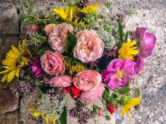Flowers_Wildflowers_France00005